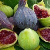 Свежий и сушеный инжир — вкусное слабительное