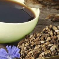 Цикорий. Польза и вред для здоровья «царь-корня»